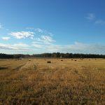 Olkipaalit pellolla